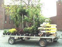 Vroege bloemenmarkt succes
